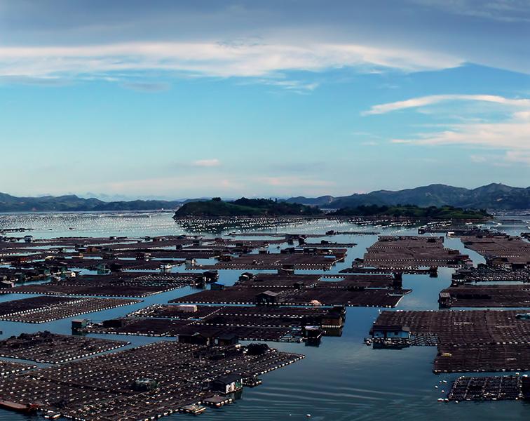 甲wan气体检测yizai养殖场沼气气体应用解决fang案图片